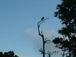 TOucans!  Love the beginning of the rainyseason…