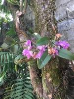 wild orchids in townhouse san ramon costa rica