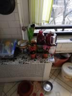 NYC kitchen gardening